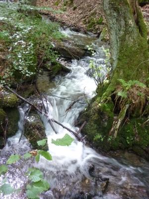 Herabschießender Wasserlauf zwischen Bäumen - Foto: © 2013 by Schattenblick